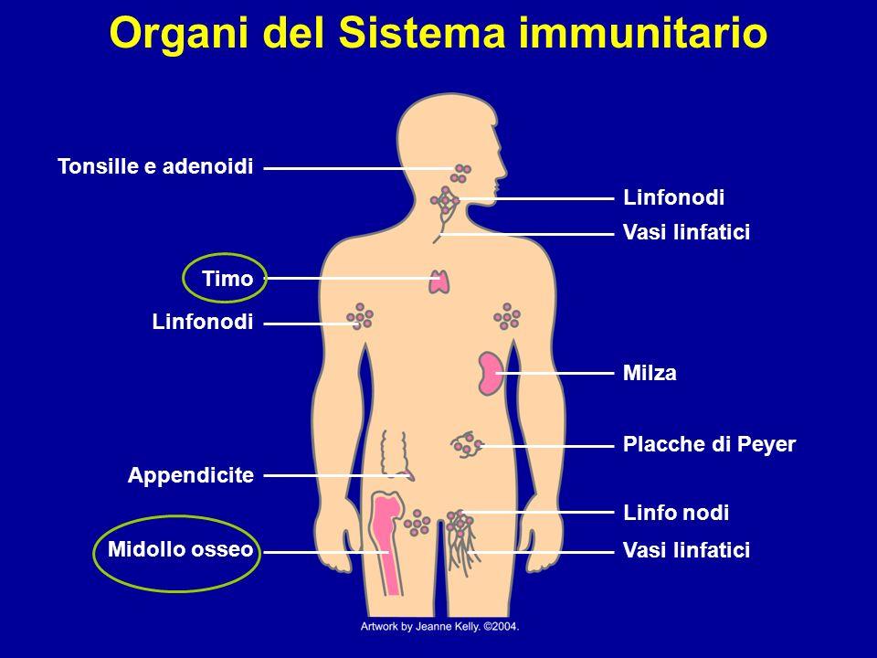 Il Sitema Immunitario: i suoi presidi
