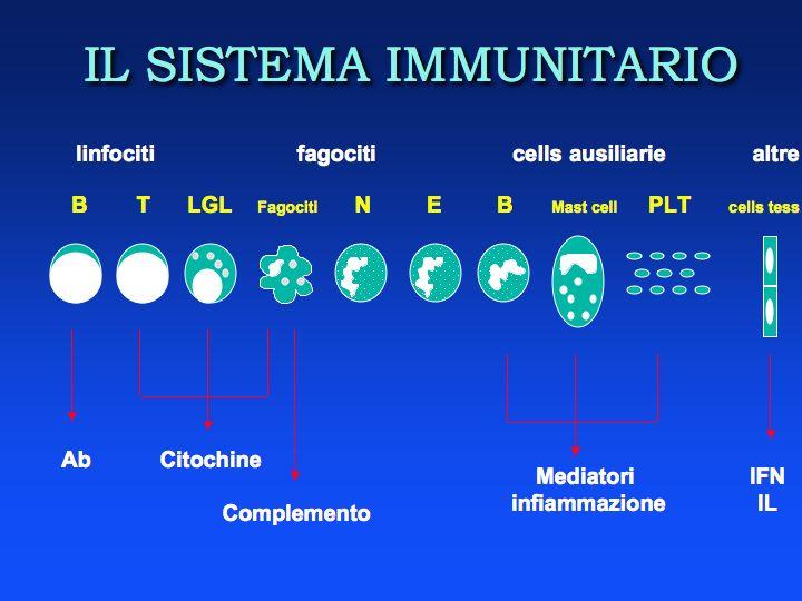 Il Sitema Immunitario: schieramento