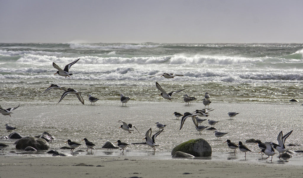 """""""Gli Uccelli"""": i corvi hanno invaso la baia!"""