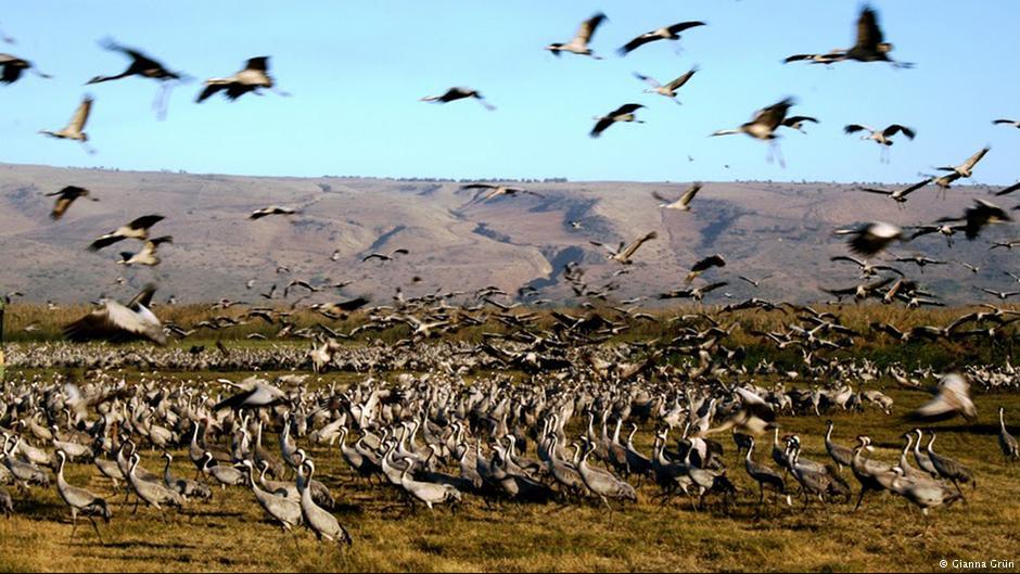 """""""Gli Uccelli"""": l'invasione!"""