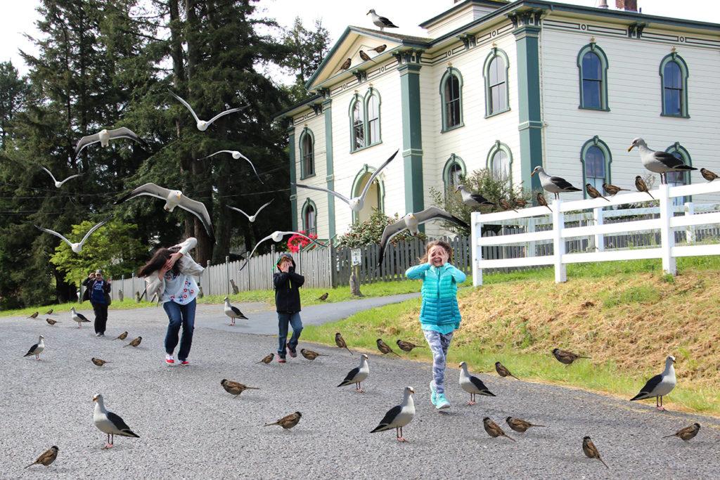 """""""Gli Uccelli"""": attacco dei corvi ai bambini della scuola elementare di Bodega Bay"""